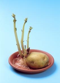 栄養生殖 | Corvet Photo Agency